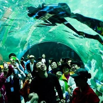 В Южной Корее открылся новый аквариум
